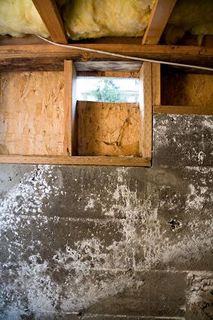 mold-in-crawl-space
