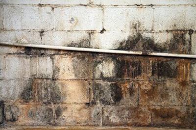 moldy-basement-wall.jpg