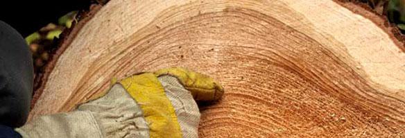 Wood Slice