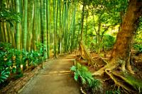 Large Diameter Bamboo Stalks