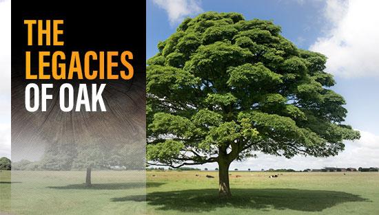 The Legacies of Oak
