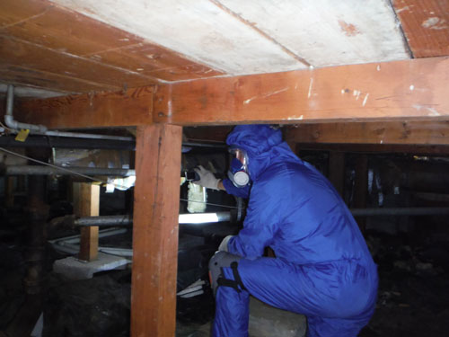 free mold home inspection